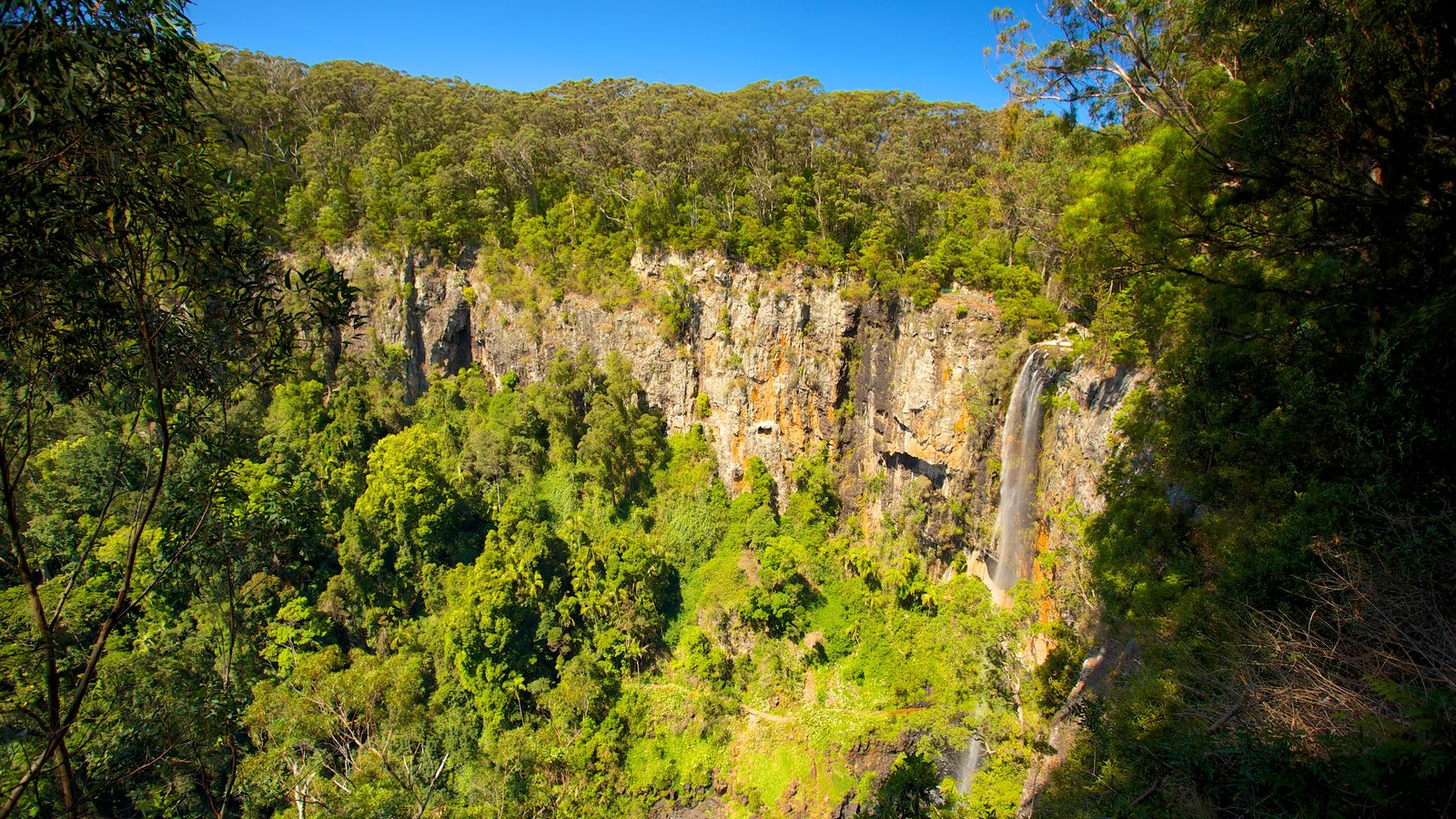 Springbrook National Park showing a gorge or canyon and forests