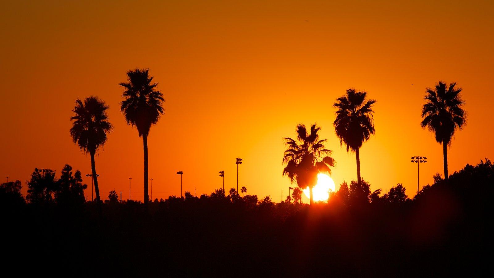 Phoenix que inclui um pôr do sol
