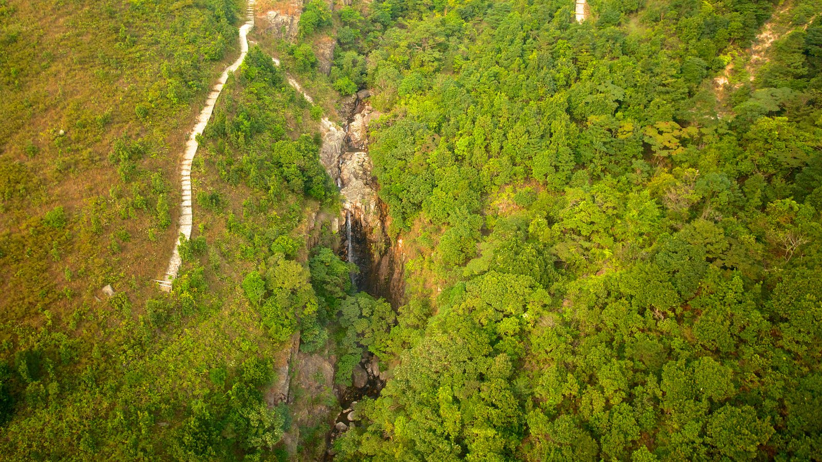 Ngong Ping 360 showing forests