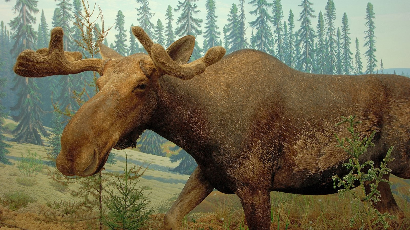 Regina showing land animals