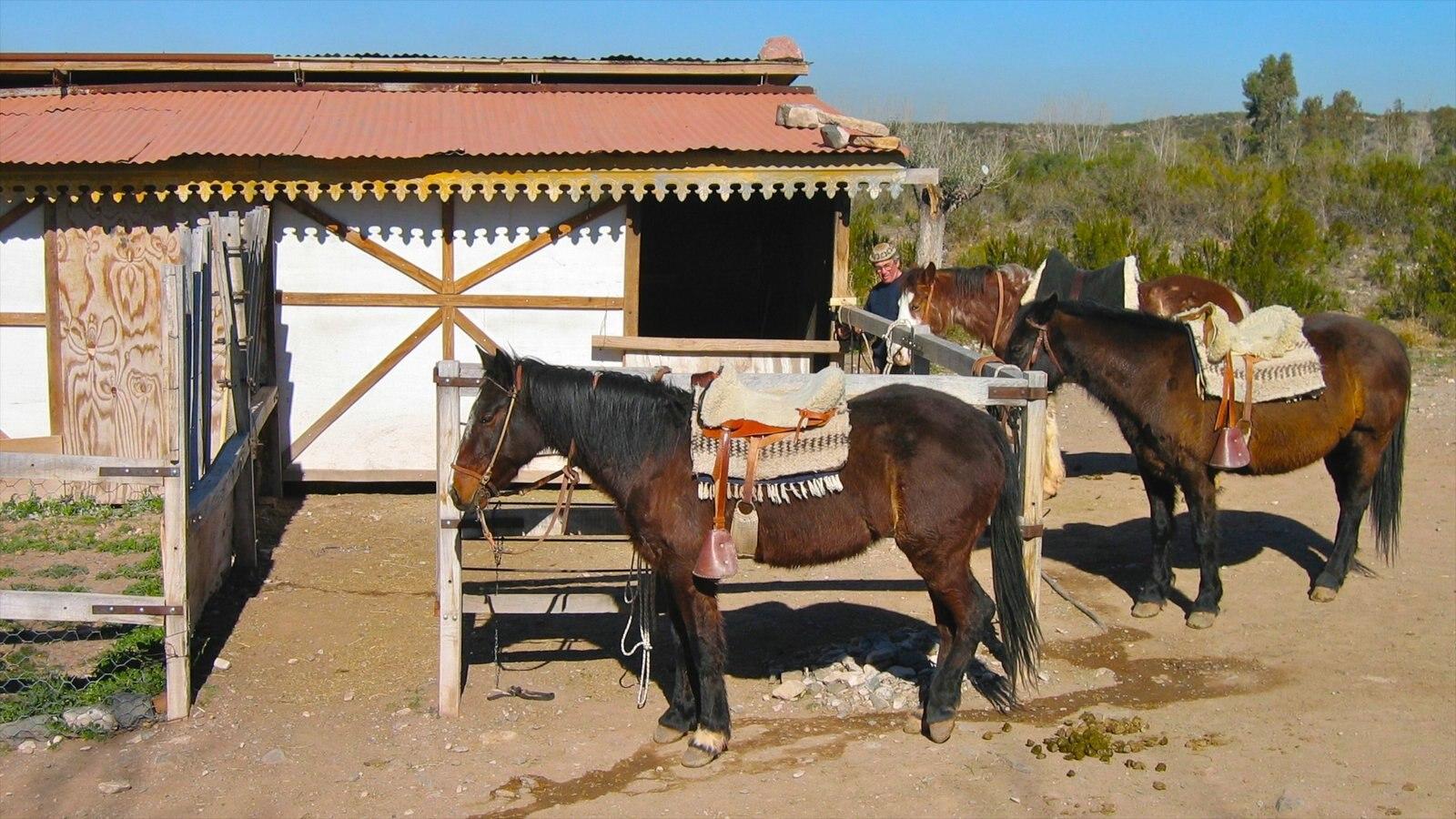 Região Vinícola de Mendoza mostrando uma casa, animais terrestres e cenas tranquilas