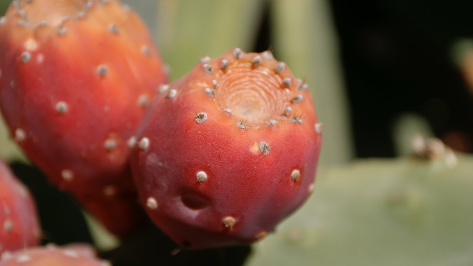 Região Vinícola de Mendoza que inclui flores