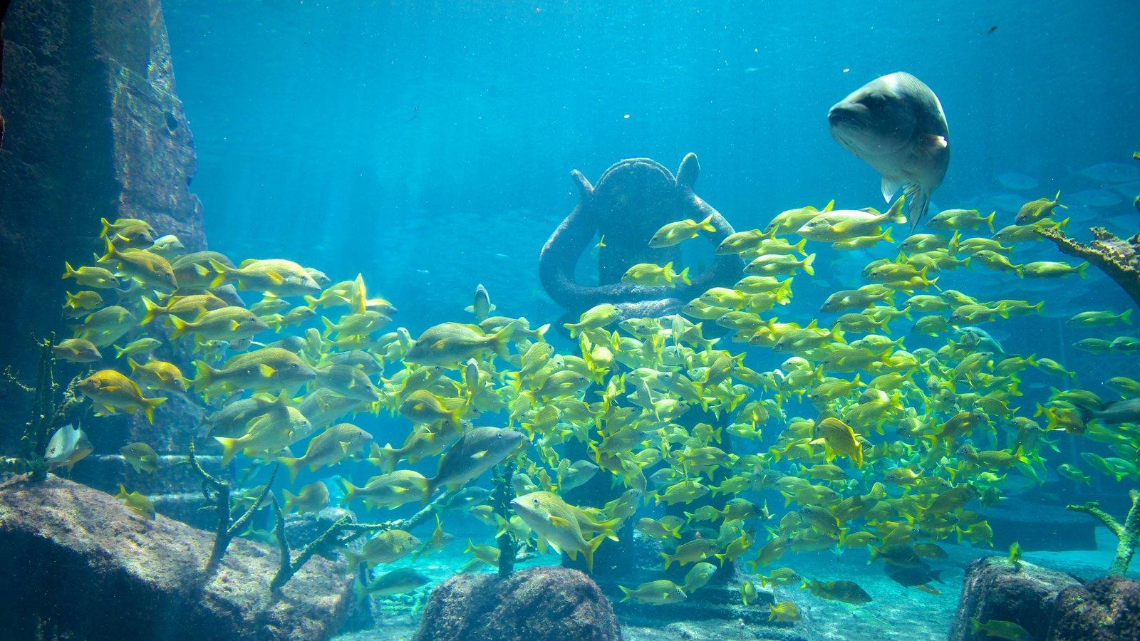 Atlantis Aquarium which includes marine life