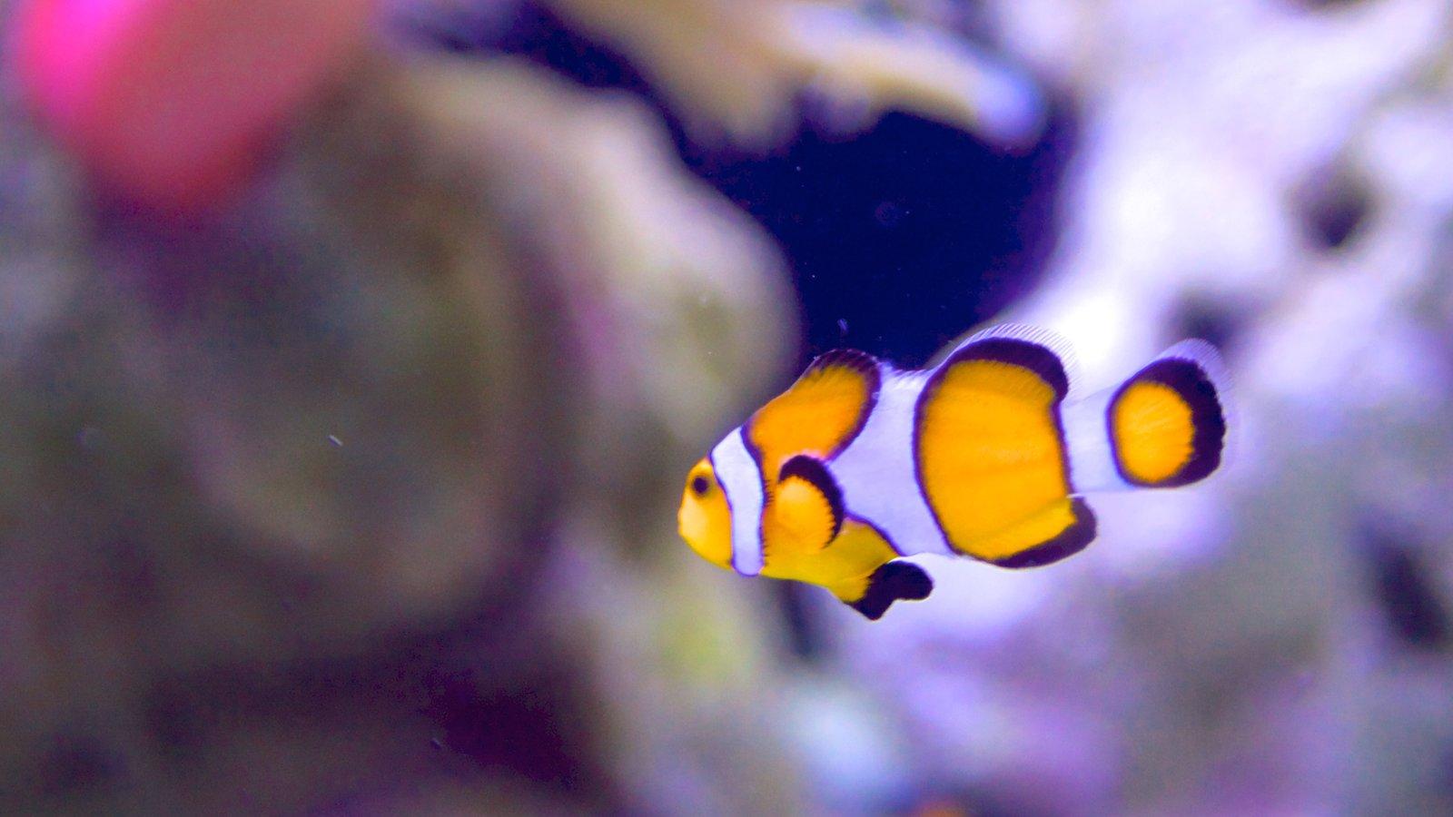Atlantis Aquarium showing marine life