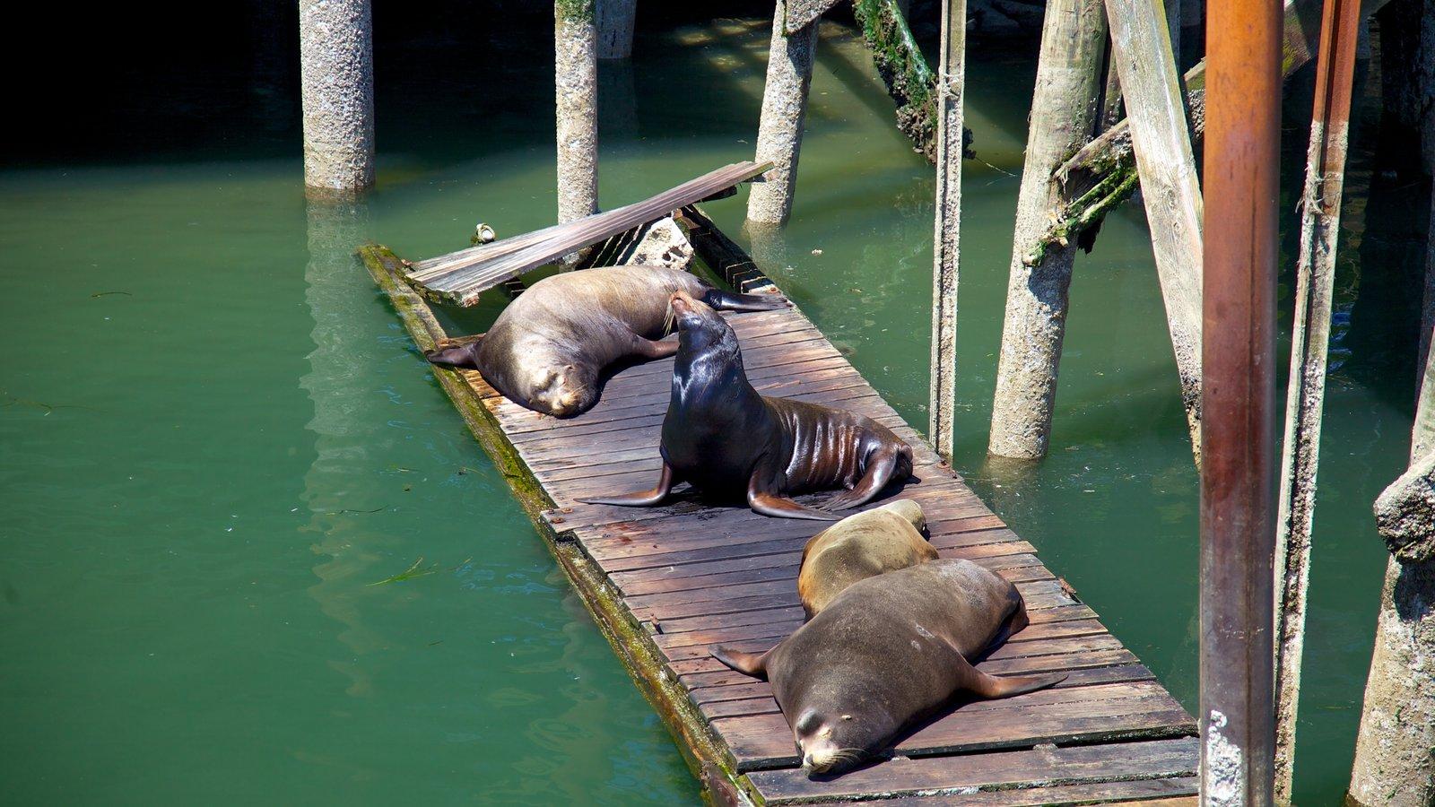 Newport featuring marine life, general coastal views and zoo animals