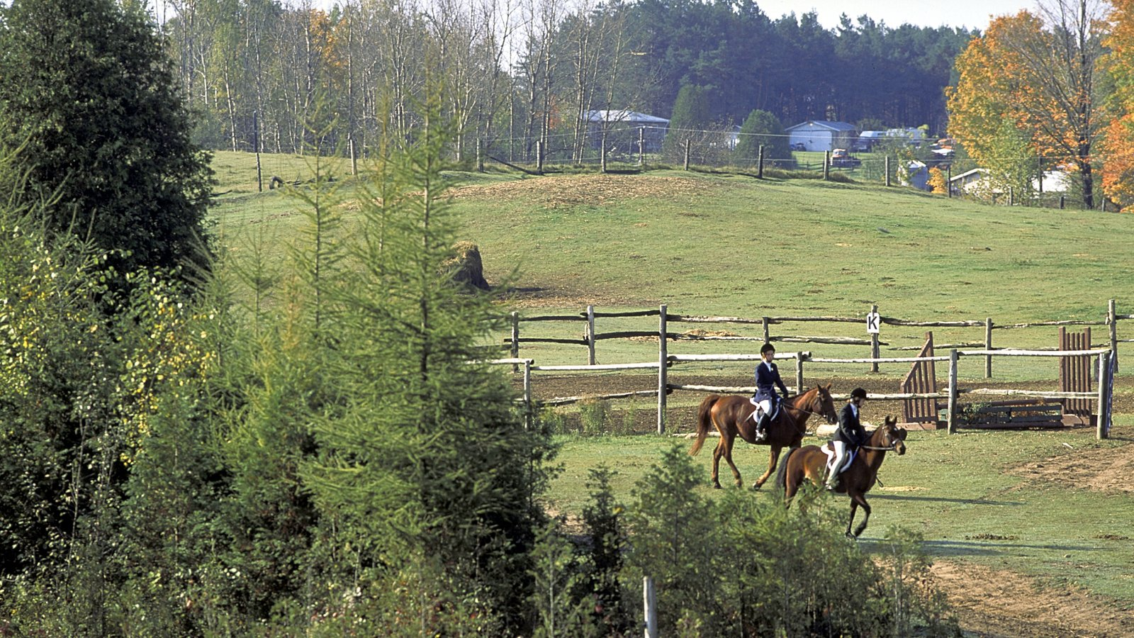 Unionville featuring forest scenes, farmland and horseriding