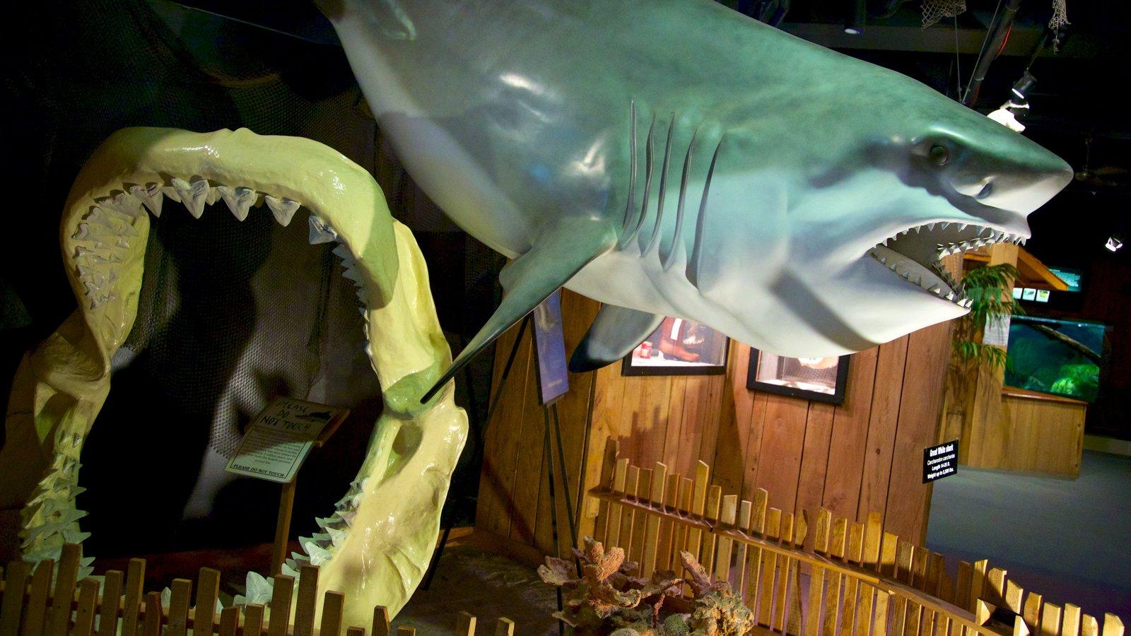 Fish aquarium in niagara falls - Aquarium Of Niagara Showing Marine Life And Interior Views