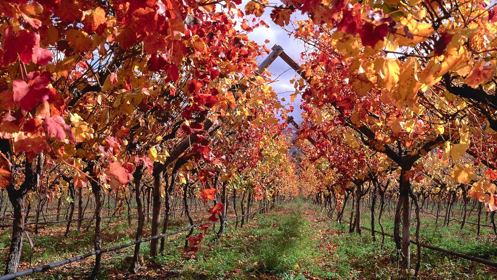 Franschhoek which includes fall colors and a garden