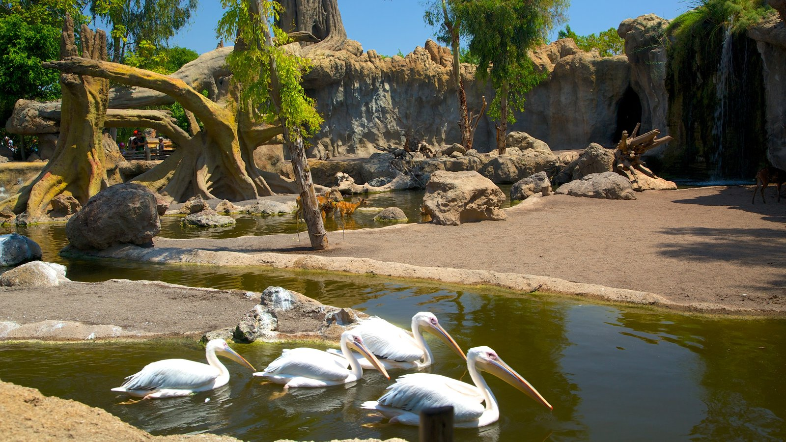 Bioparc valencia zoo pictures view photos images of bioparc valencia zoo - Bioparc de valencia ...