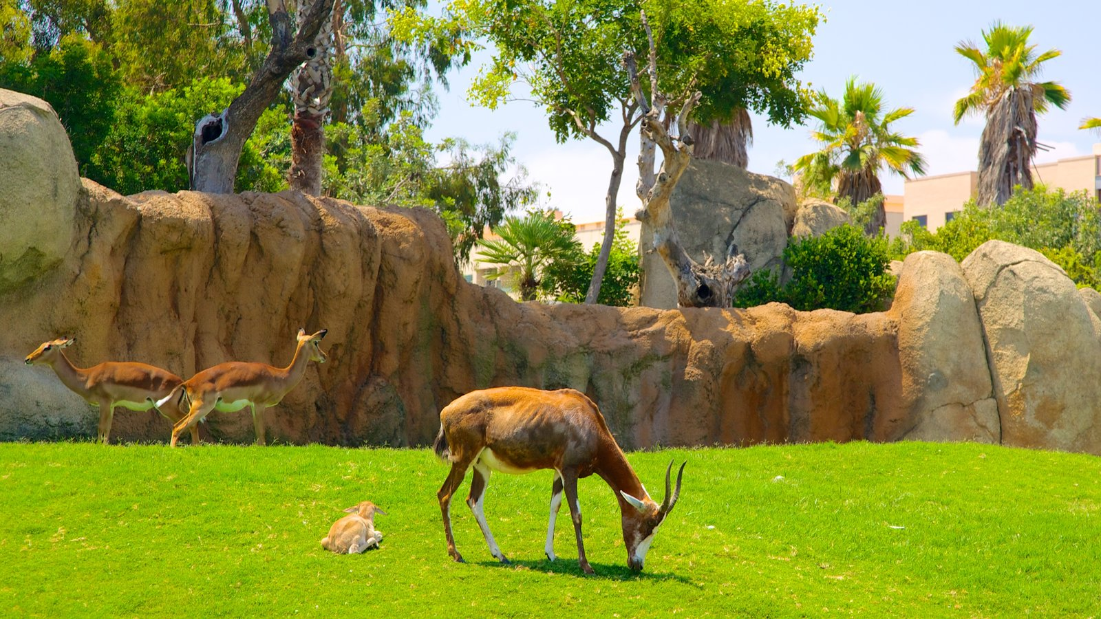Animal Pictures: View Images of Bioparc Valencia Zoo