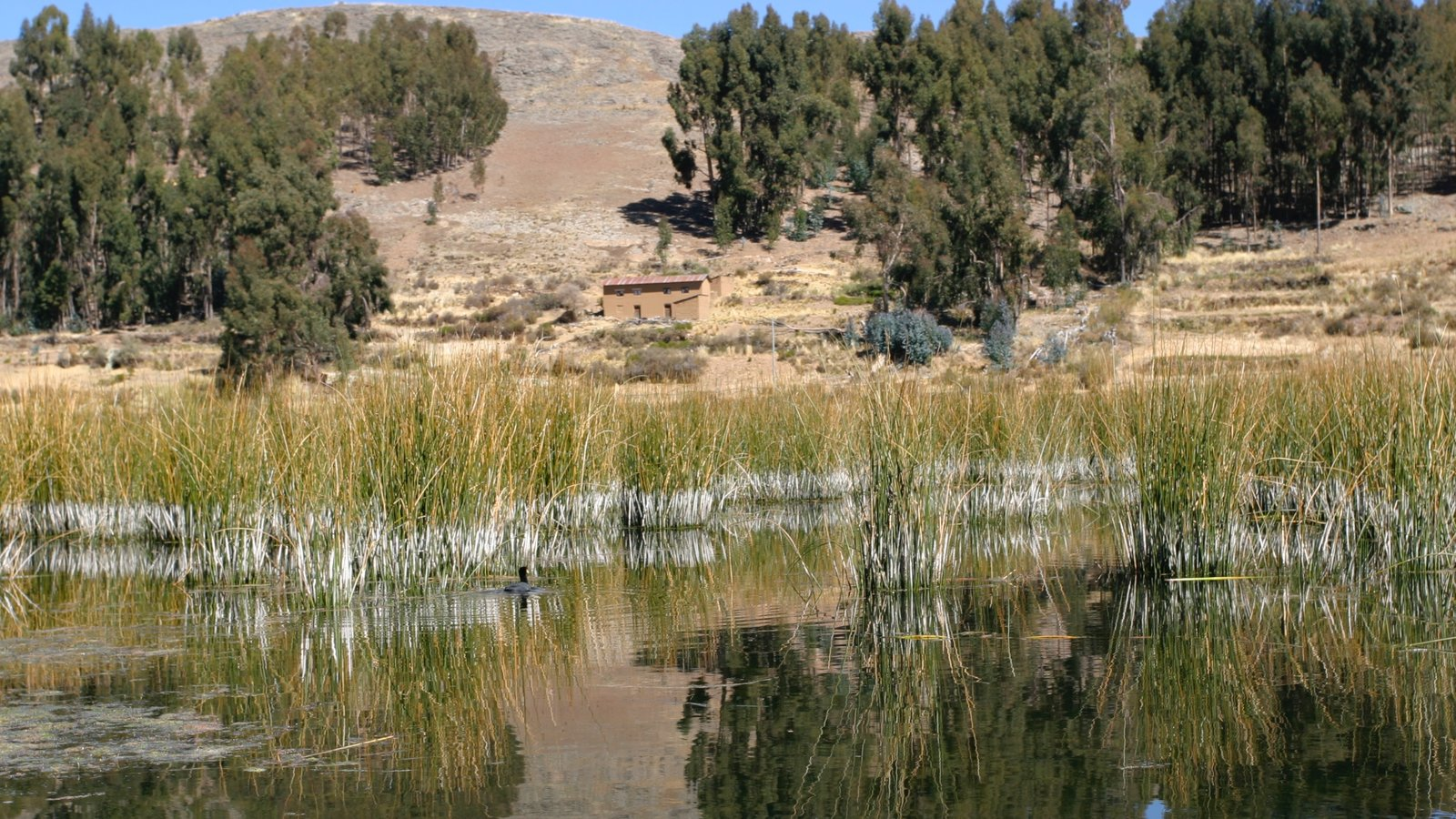 Lake Titicaca - Puno showing wetlands, tranquil scenes and a lake or waterhole