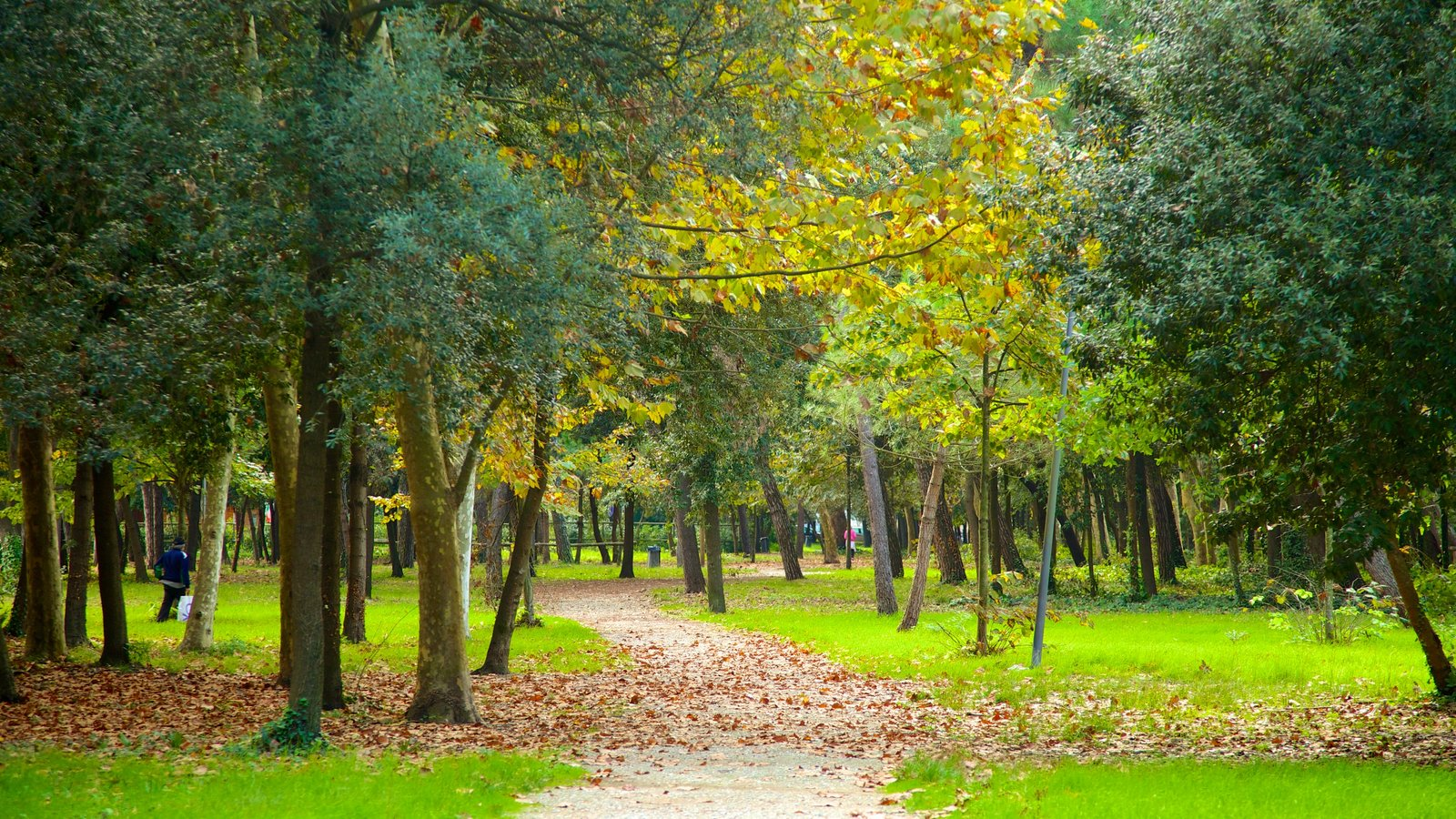 Pineta di Ponente which includes fall colors and a park