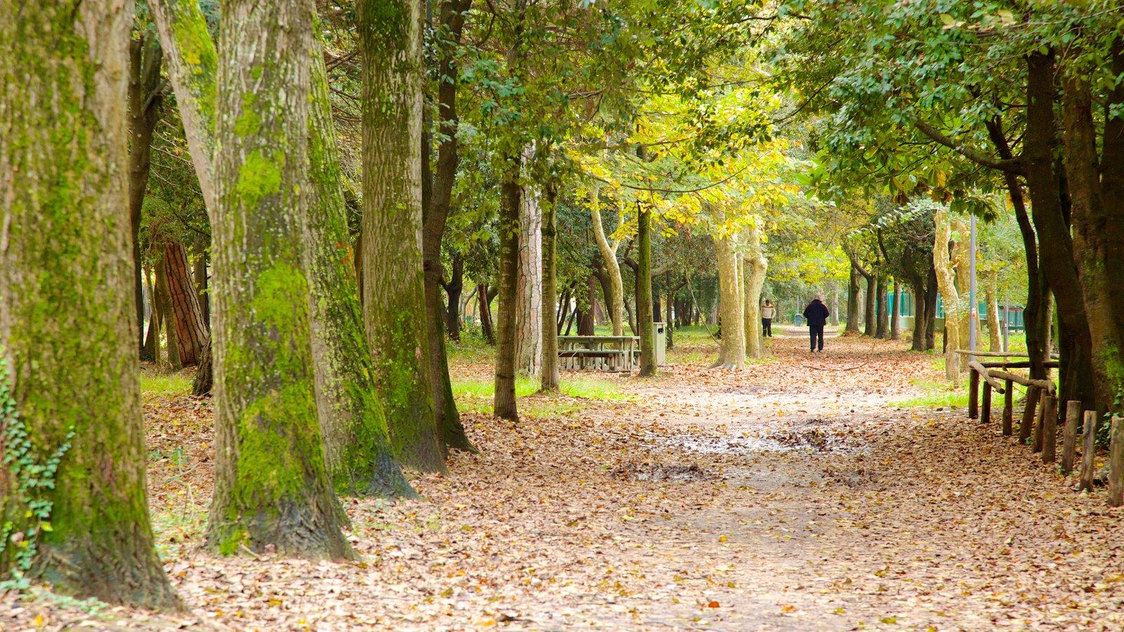 Pineta di Ponente featuring a garden and forest scenes