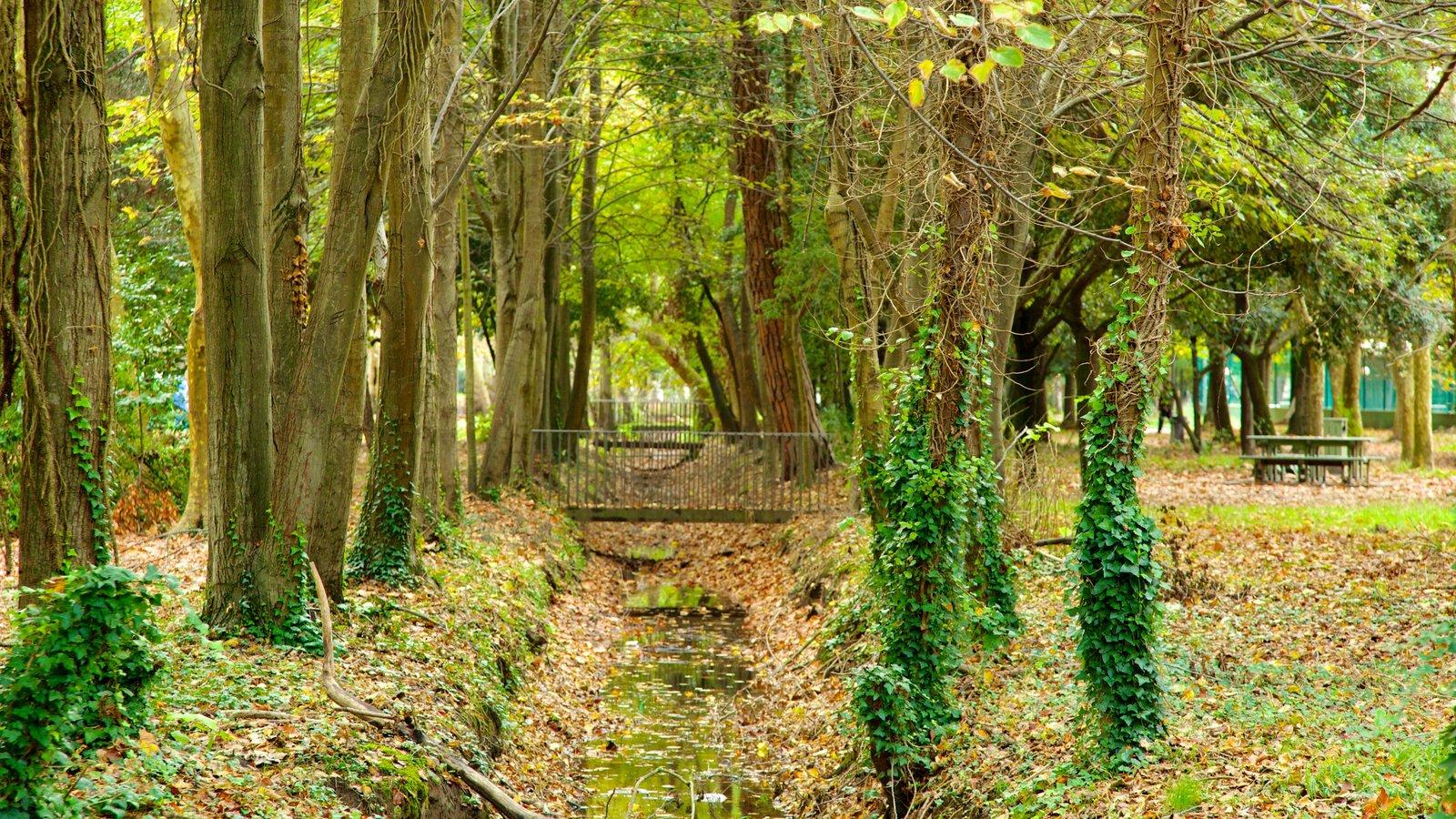 Pineta di Ponente featuring forests, a garden and a bridge