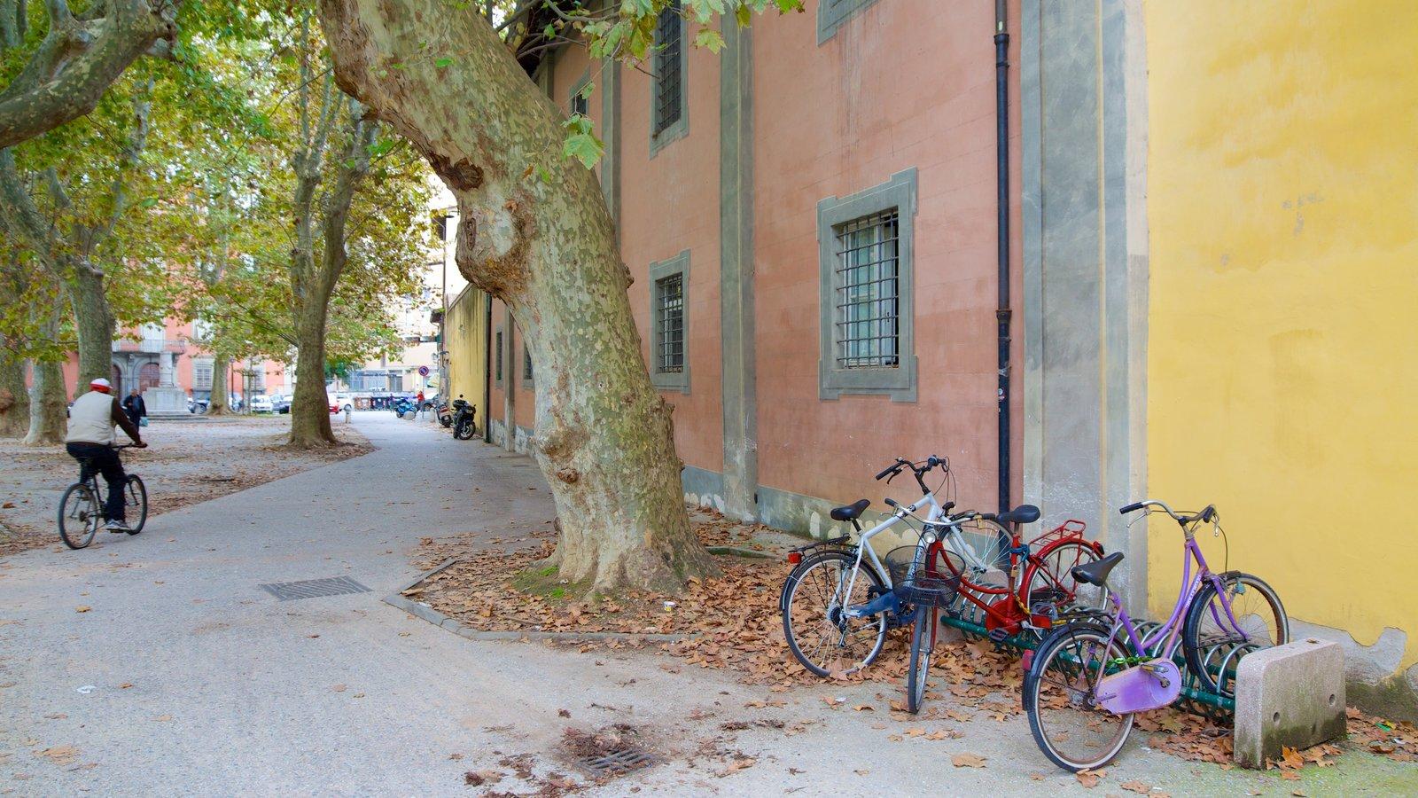 Pisa caracterizando ciclismo e cores do outono