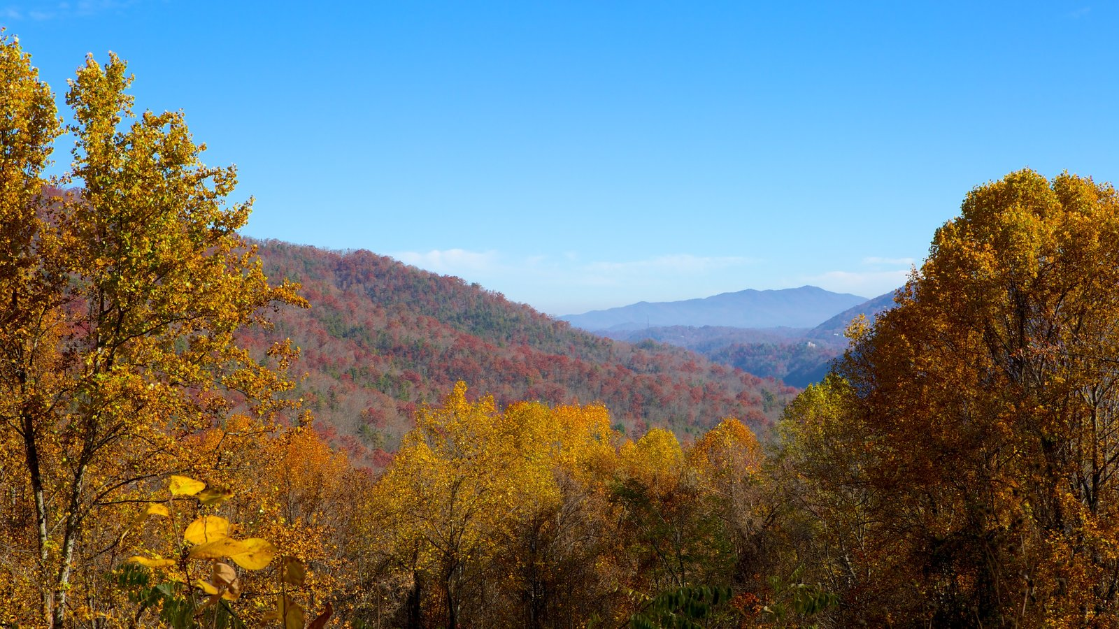 Gatlinburg showing mountains, forests and landscape views