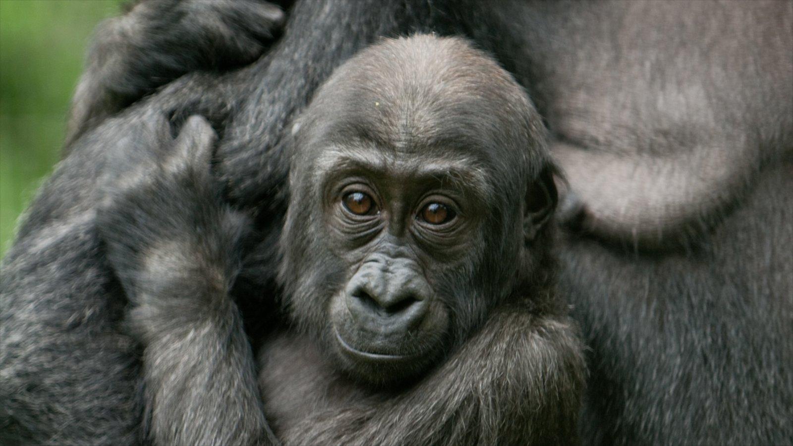 Columbus Zoo and Aquarium caracterizando animais fofos ou amigáveis, animais de zoológico e animais terrestres