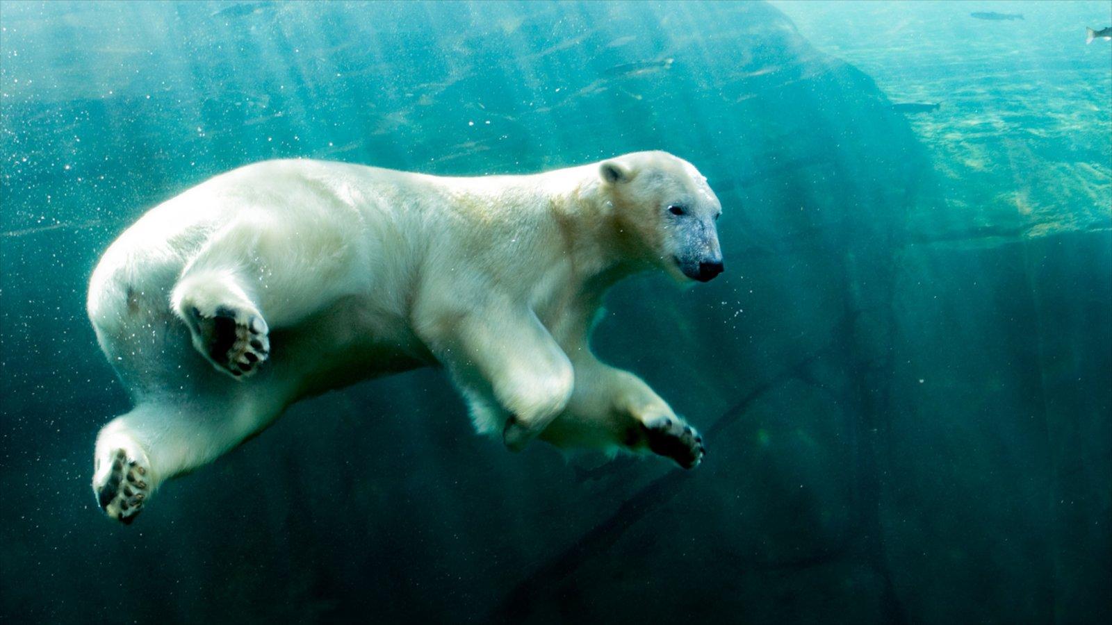 Columbus Zoo and Aquarium mostrando animais terrestres, animais de zoológico e animais perigosos