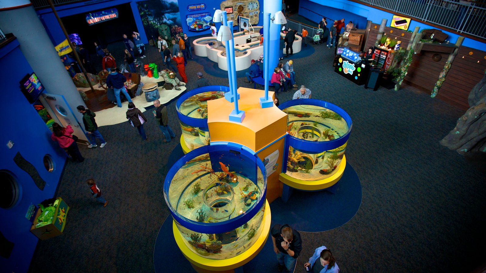 Coupon ripley's aquarium smokies