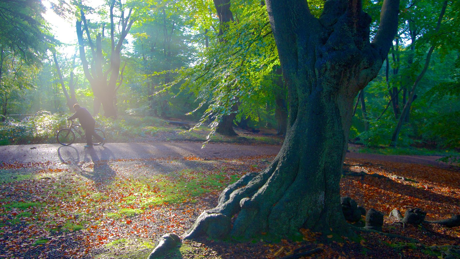 Epping Forest which includes autumn leaves, forests and cycling