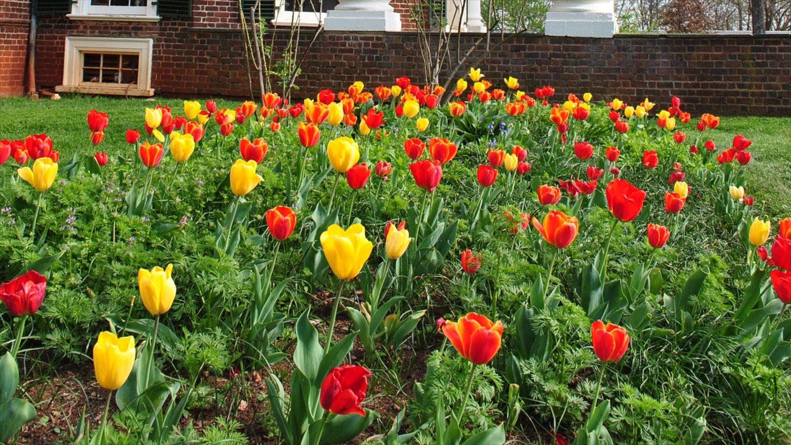 Virgínia mostrando flores e um parque