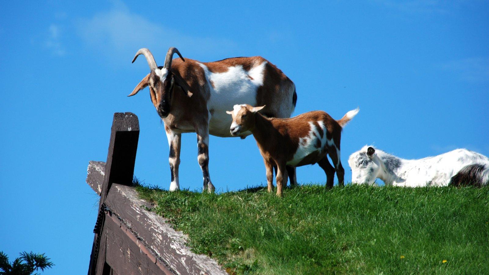 Door Peninsula which includes land animals & Animal Pictures: View Images of Door Peninsula
