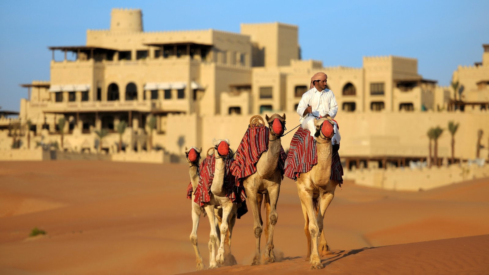 Yas Island which includes desert views and land animals as well as an individual male