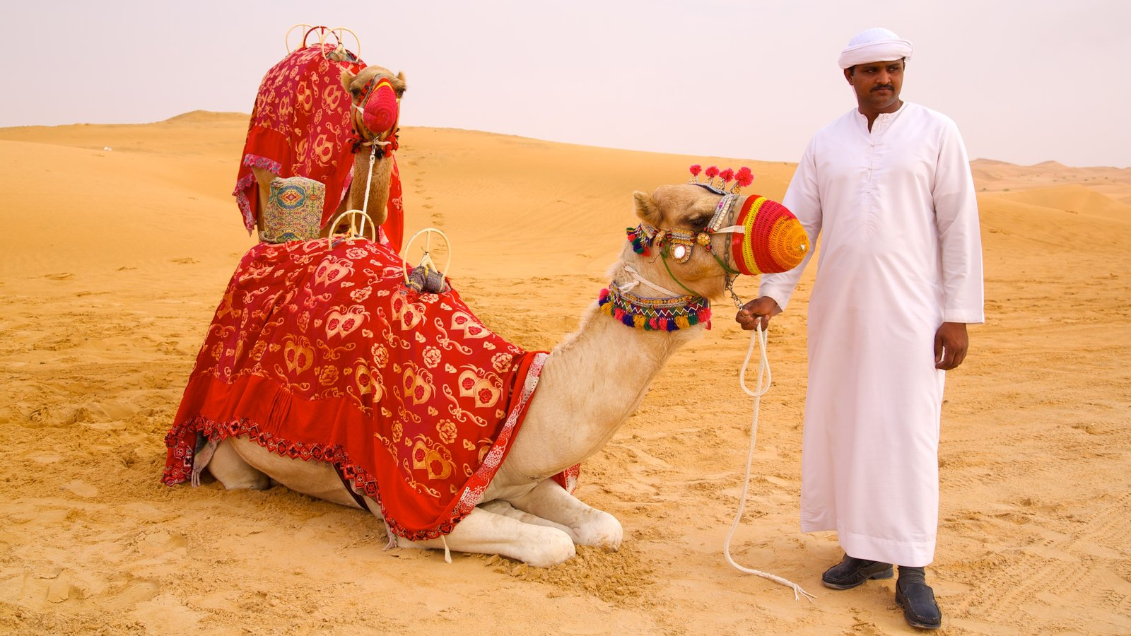Abu Dhabi Emirate which includes desert views and land animals as well as an individual male