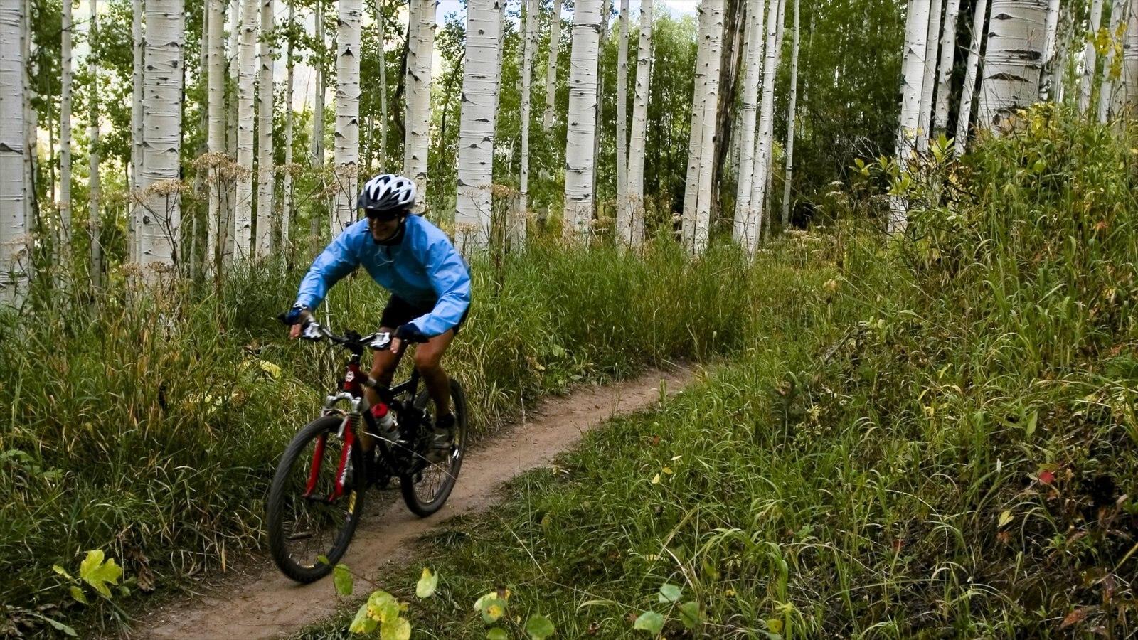Vail - Beaver Creek mostrando mountain bike e cenas de floresta assim como um homem sozinho
