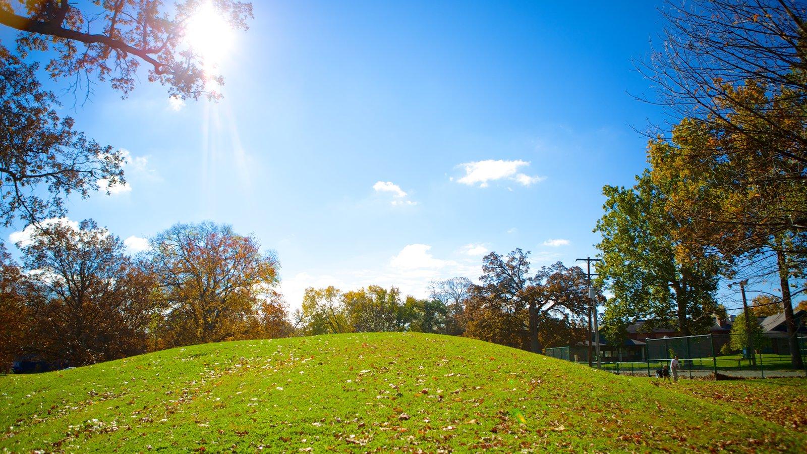 Schiller Park showing a garden