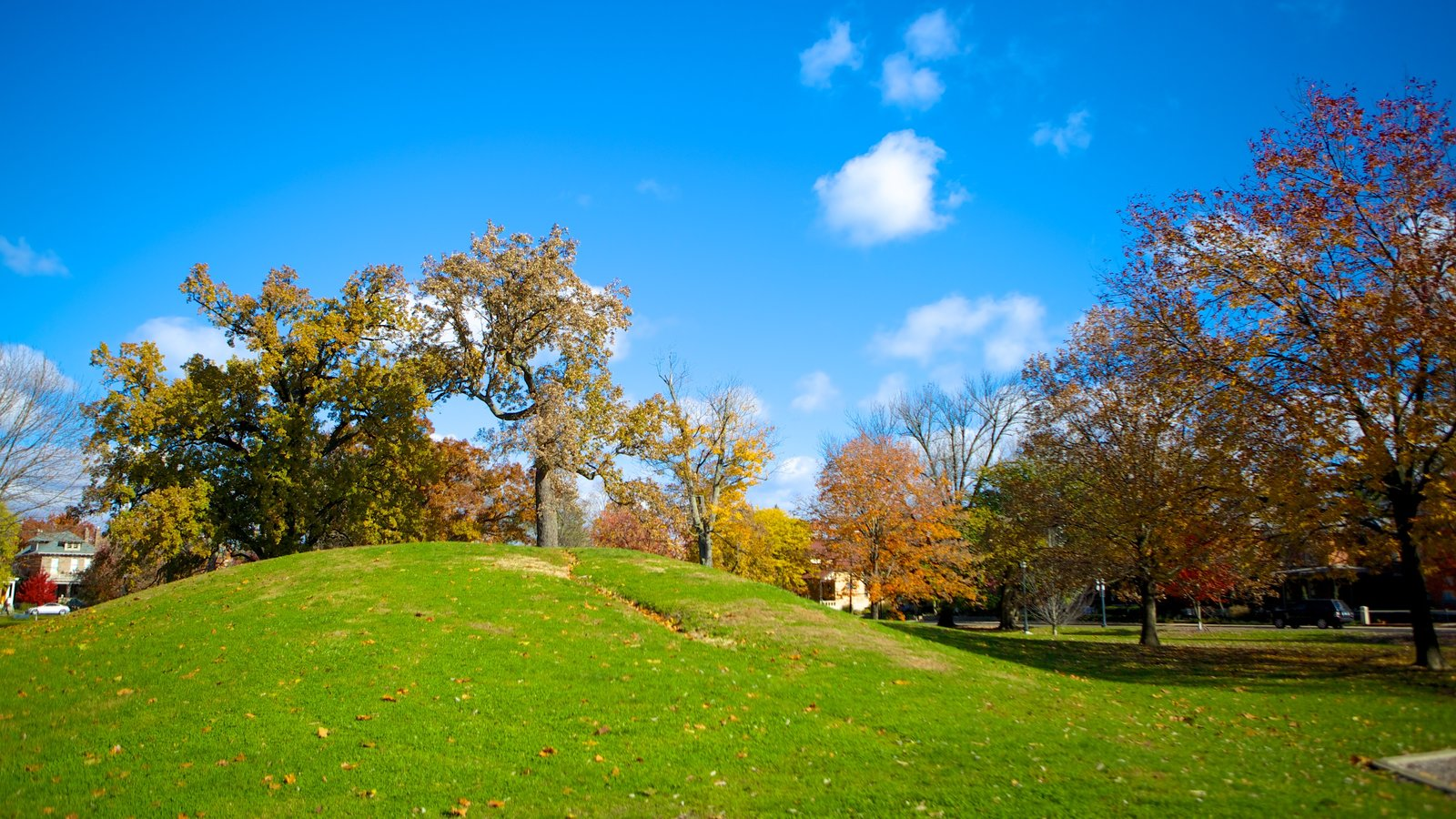 Schiller Park showing autumn leaves and a park
