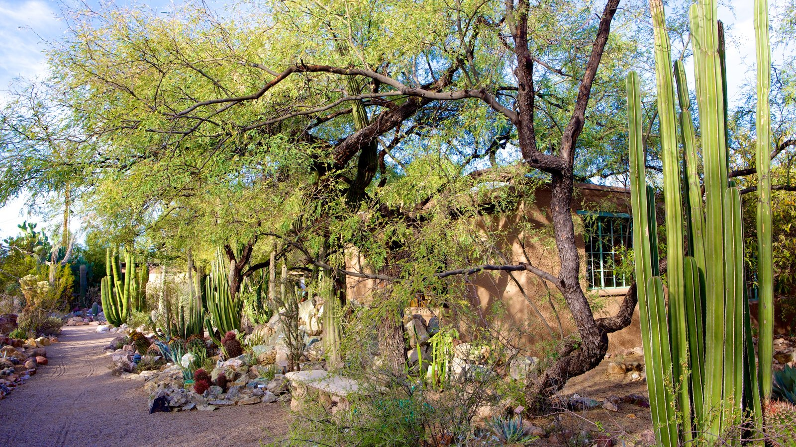 Incroyable Tucson Botanical Gardens Showing A Park