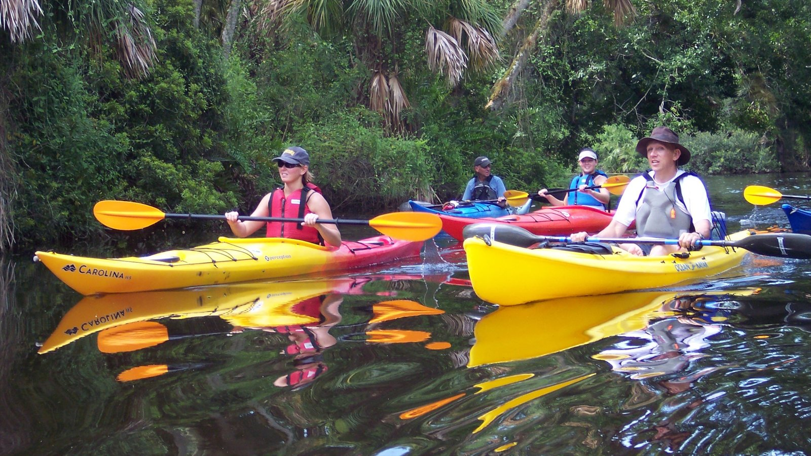 Vero Beach showing a river or creek, forest scenes and kayaking or canoeing