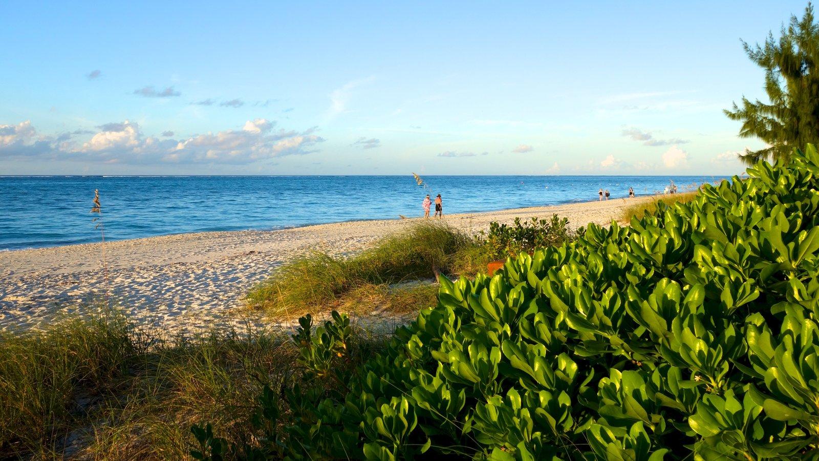 Grace Bay Beach featuring a beach