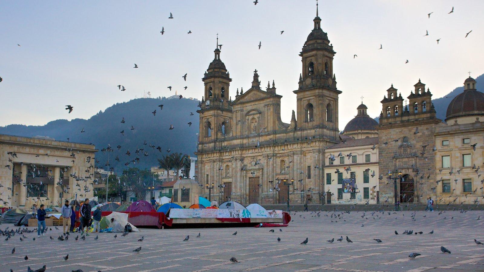 Catedral Primada caracterizando vida das aves, uma cidade e uma praça ou plaza