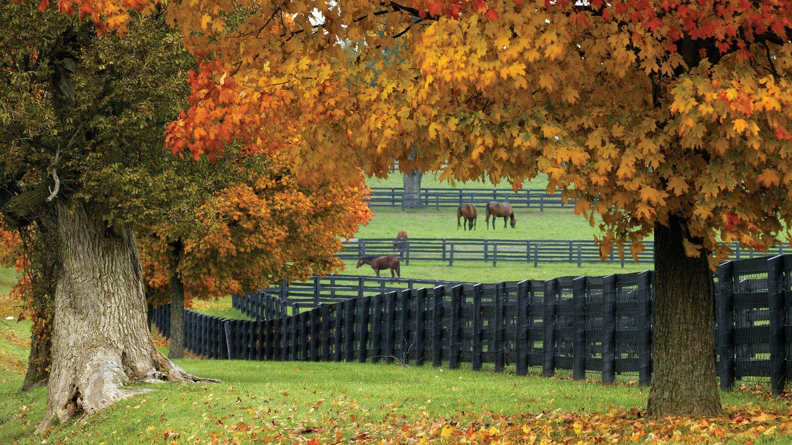 Lexington caracterizando fazenda, cores do outono e animais terrestres
