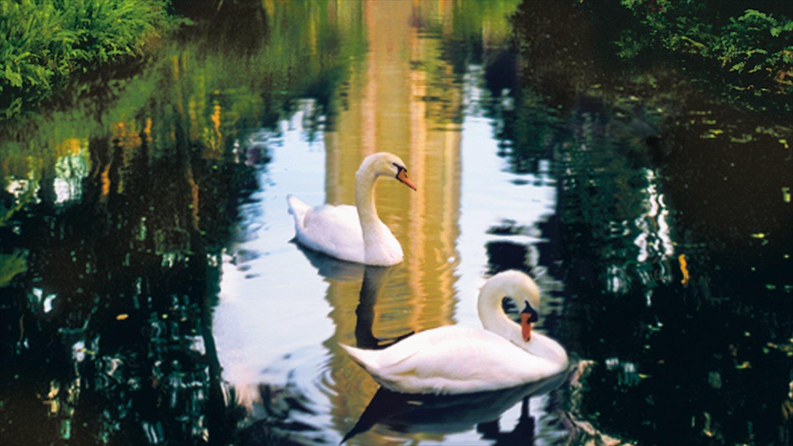 Lakeland - Winter Haven showing a lake or waterhole and bird life