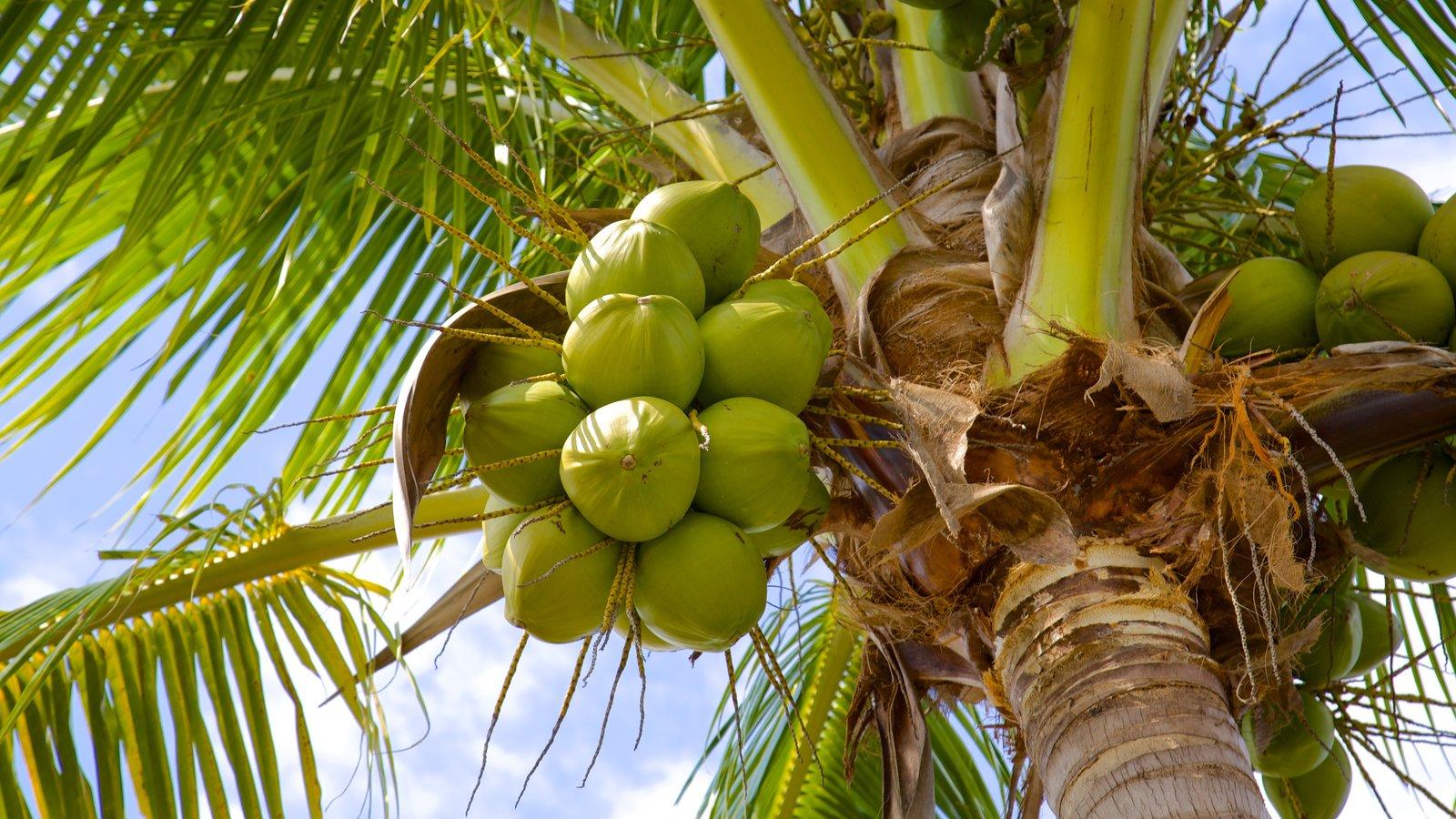 Naples que inclui cenas tropicais