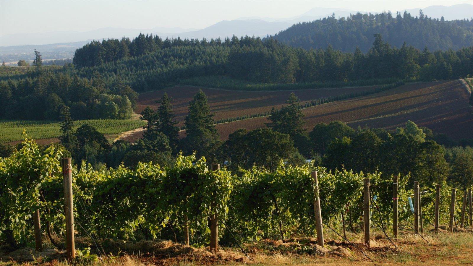 Salem que incluye tierras de cultivo