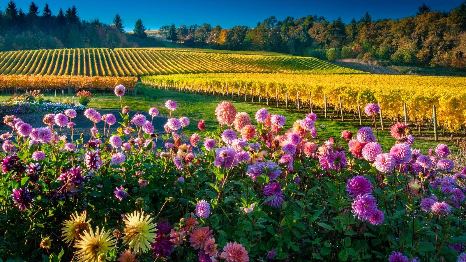 Salem mostrando flores y tierras de cultivo