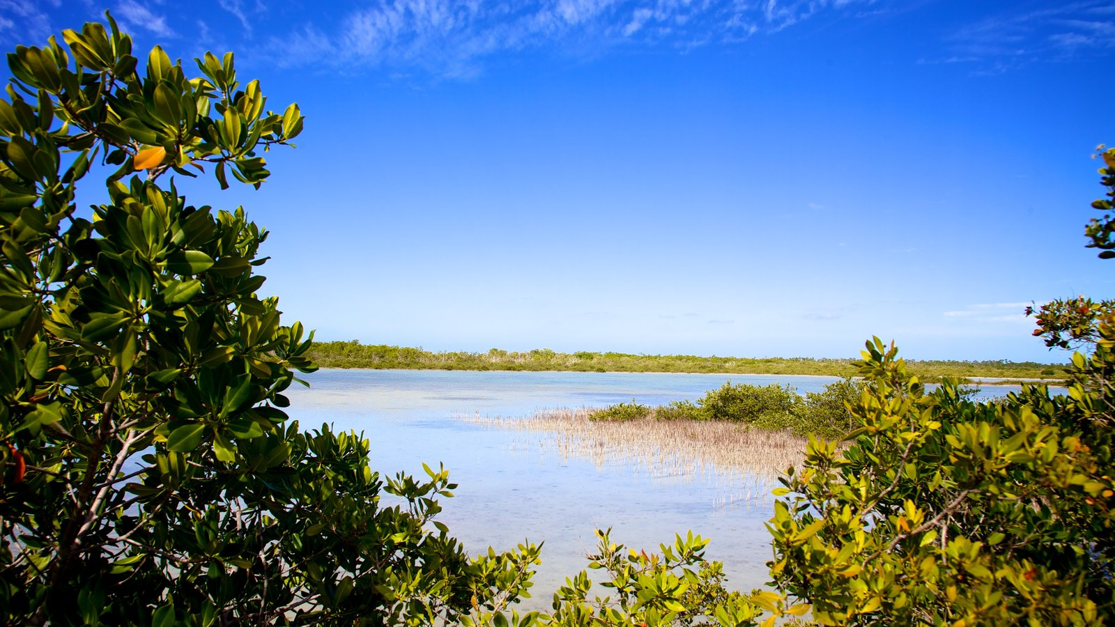 singles in big pine key Searching for a home in big pine key, fl the real estate professionals at  century 21 schwartz realty are here to help.