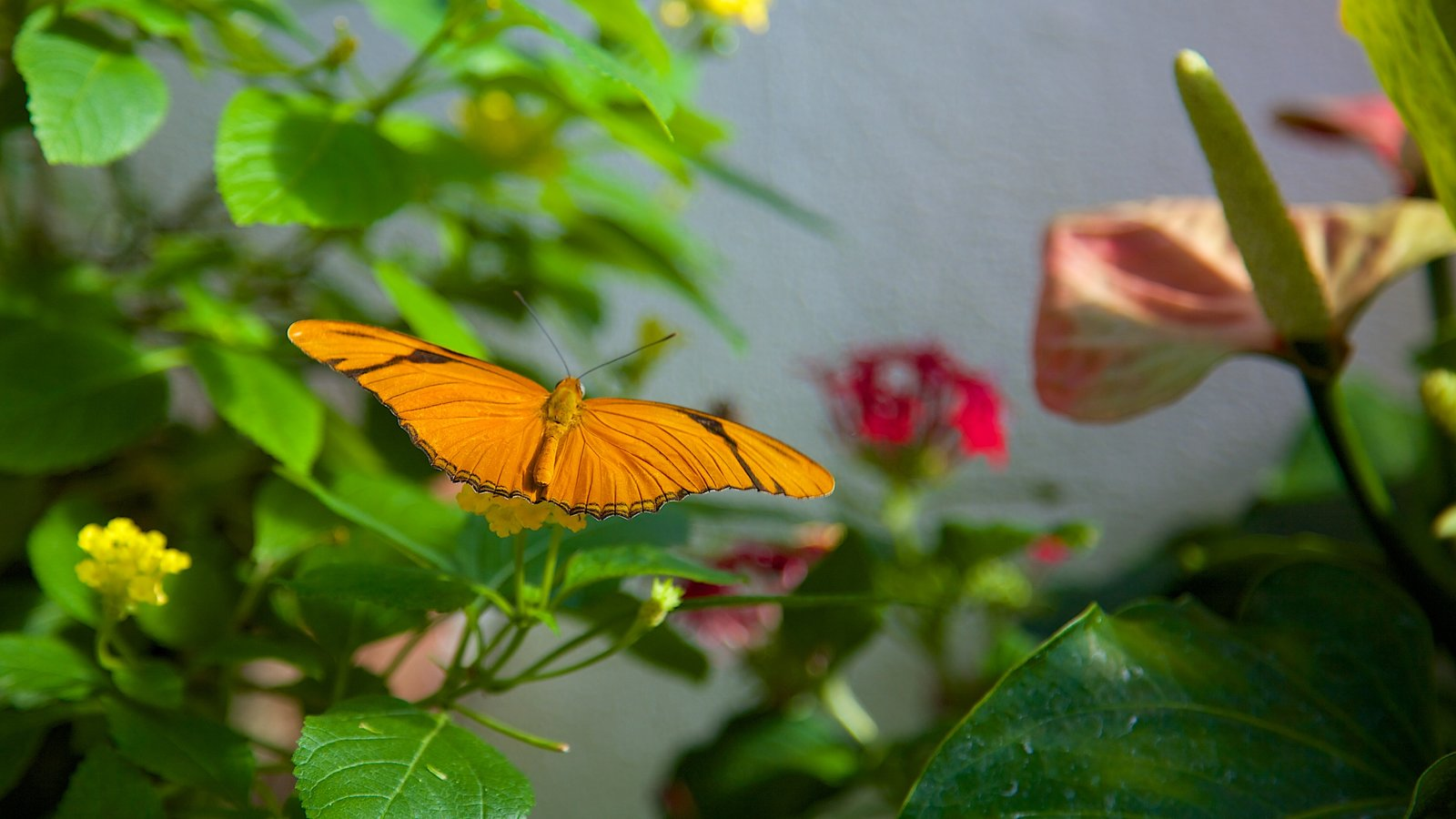 Key West Butterfly and Nature Conservatory featuring zoo animals, animals and flowers