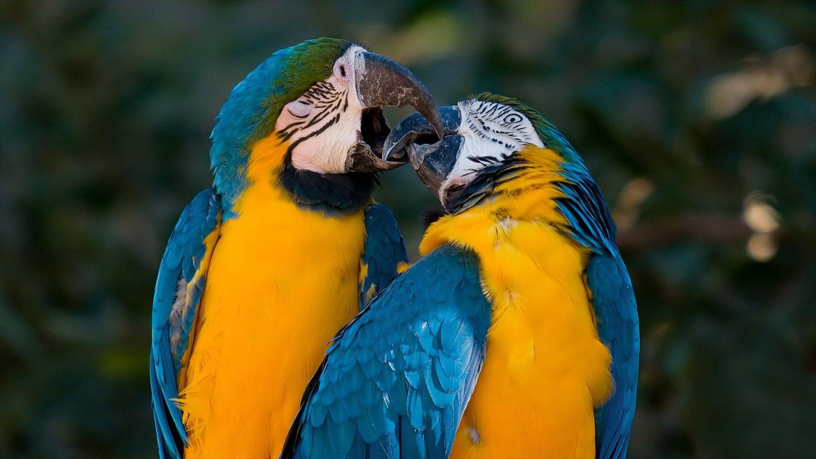 Oakland Zoo caracterizando vida das aves e animais de zoológico