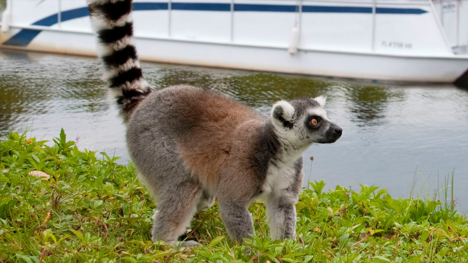 Caribbean Animals: Naples Zoo At Caribbean Gardens Pictures: View Photos
