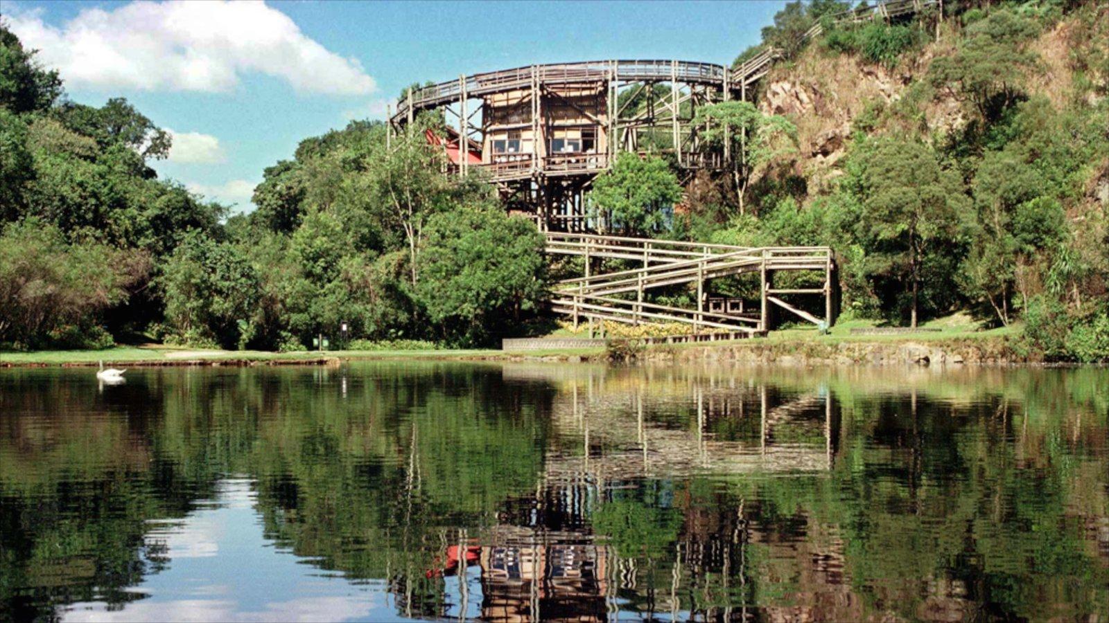 Curitiba que inclui um lago ou charco e florestas