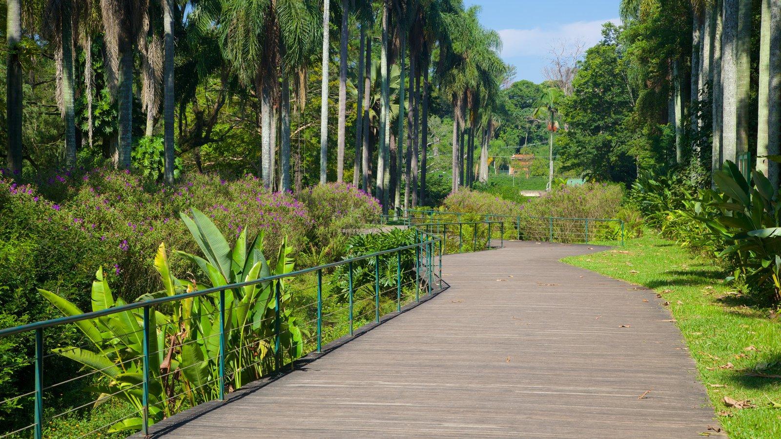 Jardim Botânico de São Paulo caracterizando um jardim
