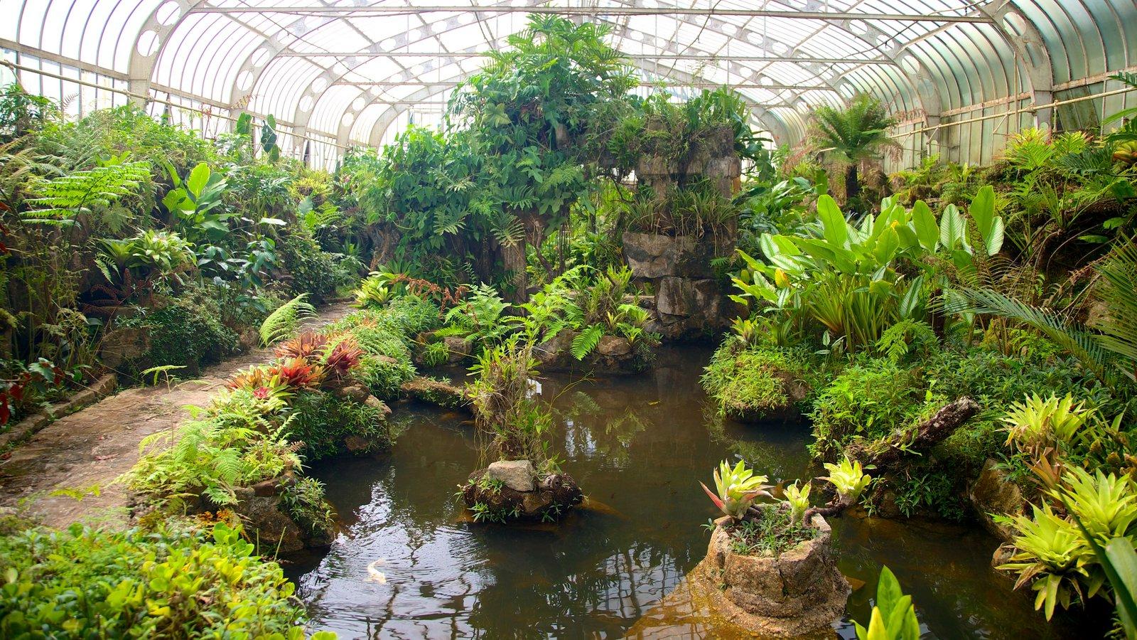 Jardim Botânico de São Paulo mostrando um parque
