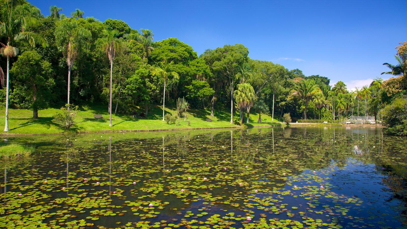 Jardim Botânico de São Paulo mostrando um lago
