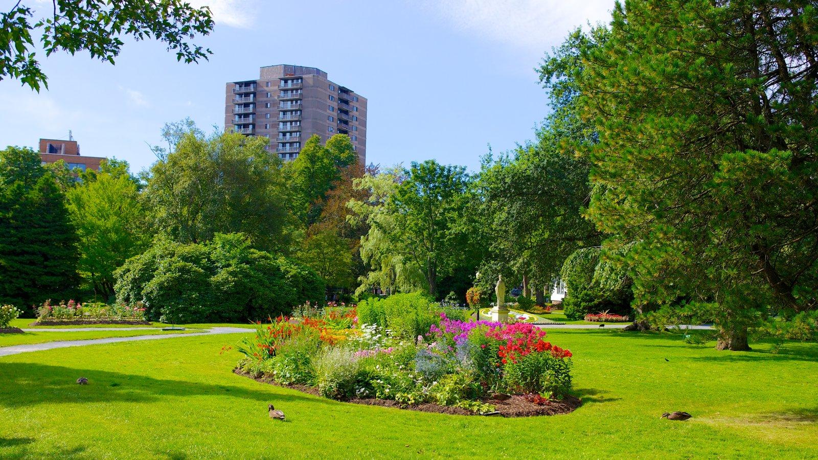 Jardines públicos Halifax mostrando un jardín