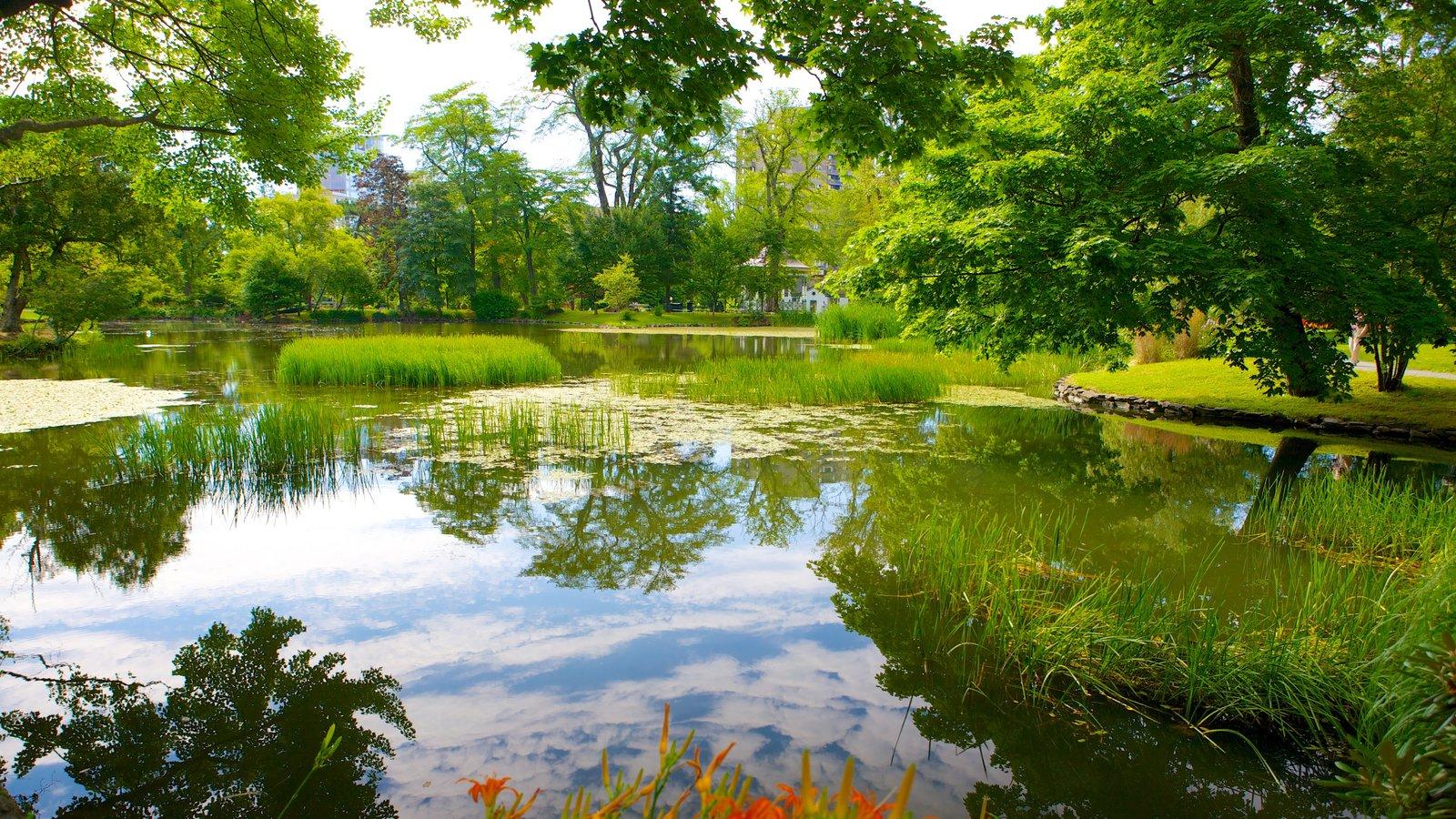 Jardines públicos Halifax que incluye un estanque y un jardín